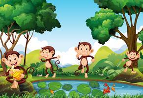 Quatre singes au bord de l'étang