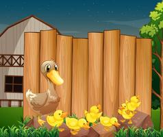 Panneau en bois et canards à la ferme
