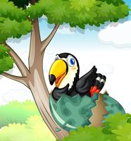 Toucan bird hatching egg on tree