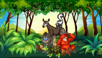 Varios tipos de animales salvajes que viven en el bosque.