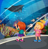 Zwei Mädchen, die Stingray am Aquarium betrachten