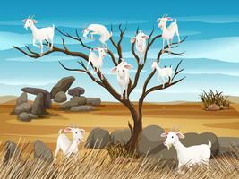 Many goats on the tree