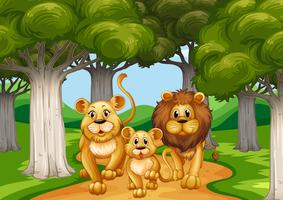 Three lions walking in the forest