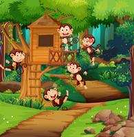 Monkeys playing at the treehouse