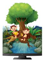 Two monkeys eating banana by the river