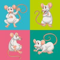 Muis op vier kleurenachtergronden