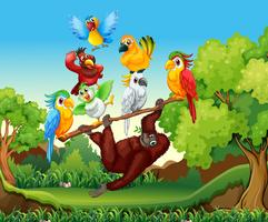 Aves selvagens e urangutan na floresta