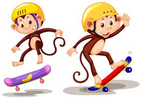 Two monkeys playing skateboard