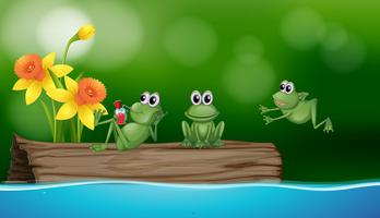 Three green frogs on the log