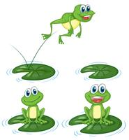 Green frogs jumping on water lily leaves