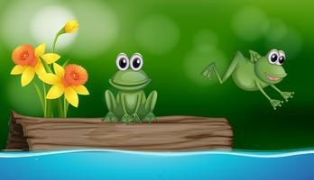 Two green frogs at the pond scene