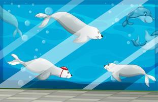 Focas y delfines nadando en acuario.