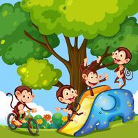 Eine Gruppe Affen am Spielplatz