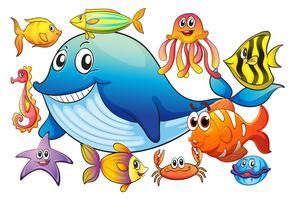 Olika slags havsdjur