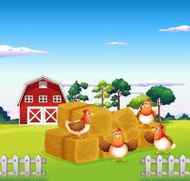 Four chickens in the hay with a barn at the back