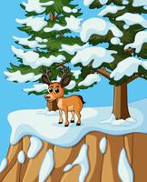 Little deer on snow mountain