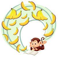 Macaco lendo sobre banana