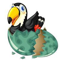 Un oiseau toucan sort un oeuf gris