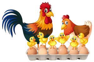 Pollos y huevos en caja de cartón.