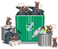 Rats looking for food from trashcans