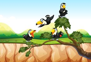 Toucans on the branch