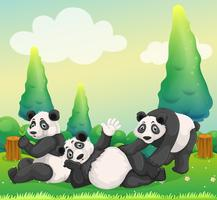 Three pandas playing in the park