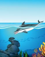 Delfino che nuota sotto l'oceano