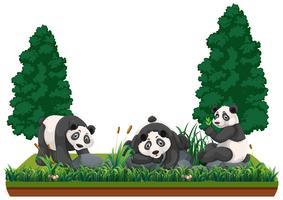 Panda in natuurlandschap