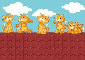 Five kittens on the red roof