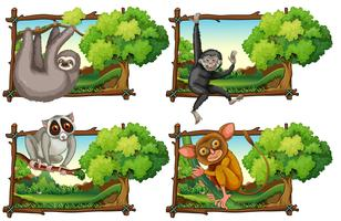 Wild animals haning on the branch vector