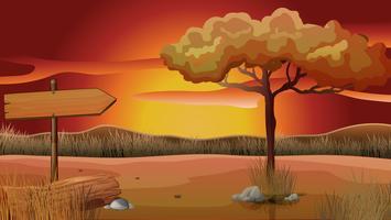 Fältets scen vid solnedgången