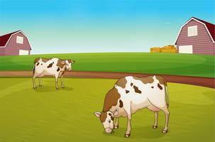 Two cows in the farm vector