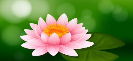 Pink water lily on green background