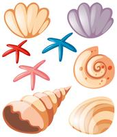 Océano con conchas y estrellas de mar