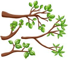 Different design of branches