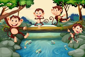 Four monkeys by the river