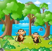 Two monkeys in the forest