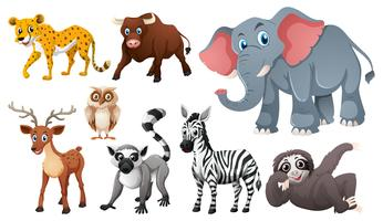 Many wild animals on white background
