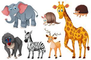 Muitos tipos de animais silvestres