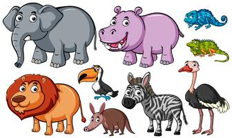 Different kinds of animals on white background