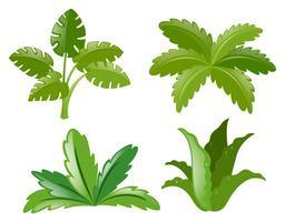 Cuatro tipos diferentes de plantas