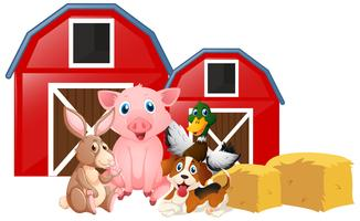 Farm animals in the farm
