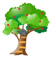 Gray owl on apple tree