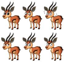 Gazelle with different facial expressions