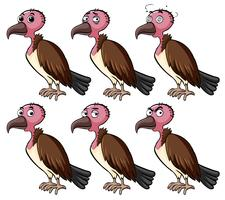 Vulture with different facial expressions