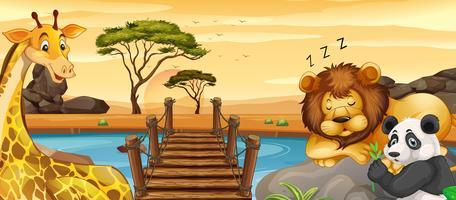 Animais selvagens descansando pelo rio