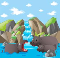 Hippo family at the waterfall vector