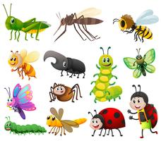 Different kinds of insects on white background