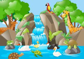 Many animals in the waterfall