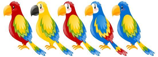 Papagaios de arara em cores diferentes
